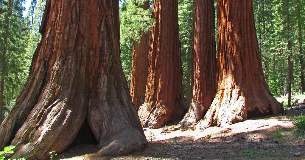 IMAGE: https://ohiohick.smugmug.com/Travel/United-States/US-West-Coast/California-2012/CA-2012-Day-05/i-6LjD9Fv/0/XL/CA_2012_A_0558_edit01-XL.jpg